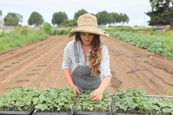 Transplanting the third round of summer crops last season...