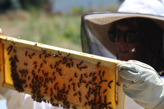 The bees have a lot to teach us as farmers... and it's been one of our favorite projects yet!