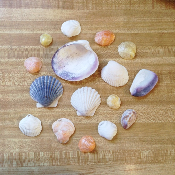 My loot from the beach
